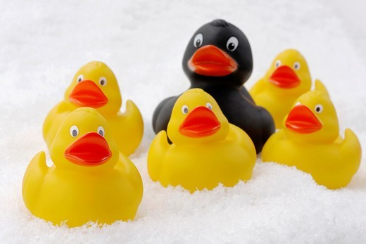 flock of rubber ducks on artificial snow - symbolism black duck of the family : Stock Photo