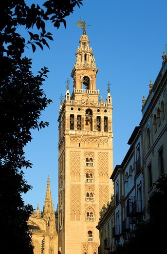 Cathedral,Giralda tower,Sevilla,Andalucía,Spain : Stock Photo