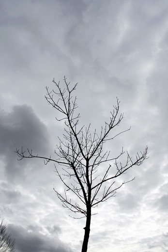 Stock Photo: 1566-912159 one single bare tree branches and dark moody sky