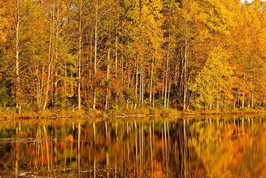 Fall color in Seneca Creek State Park : Stock Photo