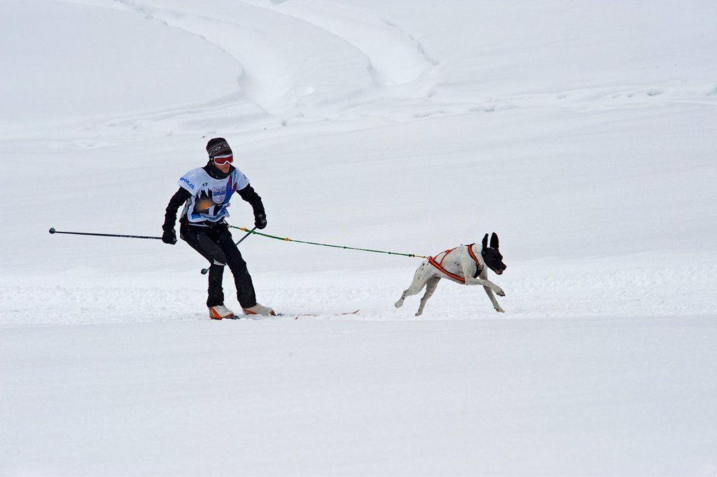 Stock Photo: 1566-914241 Dog Sled Races, Gadmen, Bernese Oberland, Switzerland