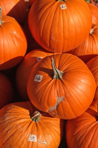 Stock Photo: 1566-914448 Close up of lots of orange pumpkins, Germany, Europe