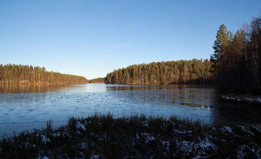 Stock Photo: 1566-916203 Small lake starting to freeze over at Autumn, LocationKotalampi,Rokua,Rokuan National Park, Rokuan kansallispuisto,Vaala,Finland,Scandinavia,Europe