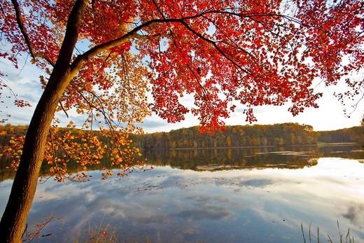 Stock Photo: 1566-917979 Fall color in Seneca Creek State Park