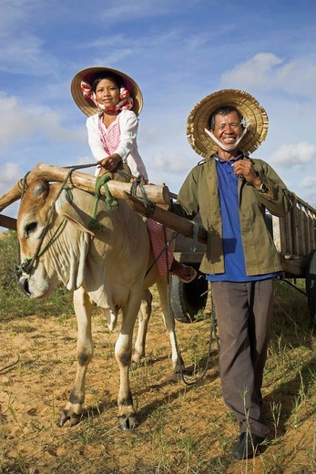 Young girl in conical hat rides bullock pulling cart white sand dunes near Mui Ne south east Vietnam : Stock Photo