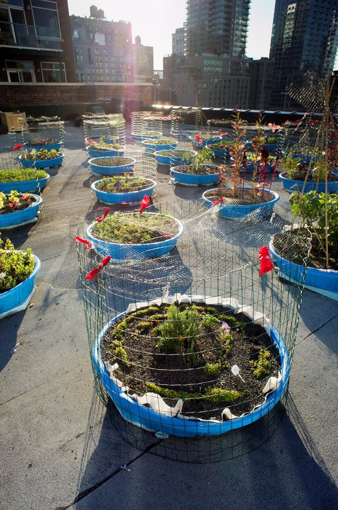 Stock Photo: 1566-920572 The Hell´s Kitchen Farm Project is seen on the roof of a church in the Hell´s Kitchen Clinton neighborhood of New York The small farm, staffed by volunteers, provides produce to two local food pantries The use of kiddie pools was chosen in lieu of constru. The Hell´s Kitchen Farm Project is seen on the roof of a church in the Hell´s Kitchen Clinton neighborhood of New York The small farm, staffed by volunteers, provides produce to two local food pantries The use of kiddie pools was chosen in lie