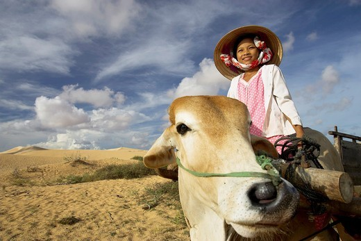 Stock Photo: 1566-920926 Young girl in conical hat riding bullock pulling cart white sand dunes near Mui Ne south east Vietnam
