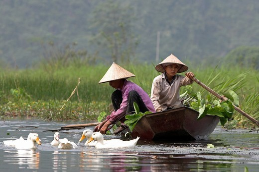 Stock Photo: 1566-920930 Ducks beside conical hat women collecting water lily pads on Yen River leading to Perfume Pagoda near Hanoi north Vietnam
