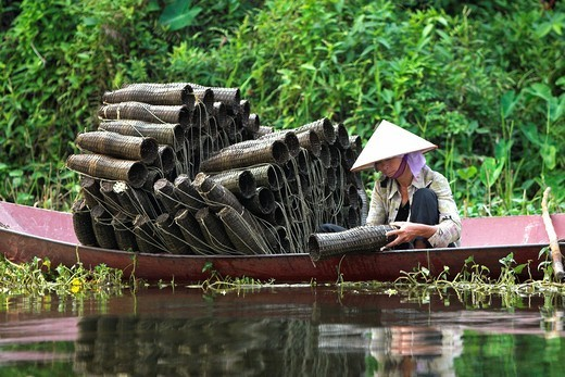 Stock Photo: 1566-920931 Conical hat fisher woman tends traditional basket fish traps on Yen River leading to Perfume Pagoda near Hanoi Vietnam