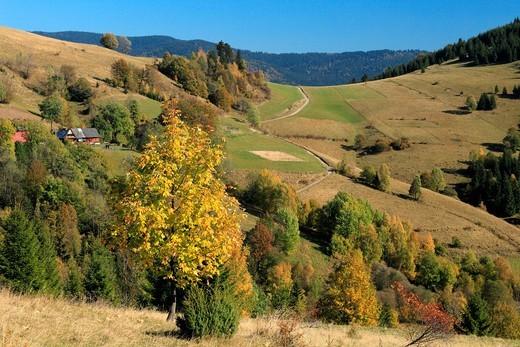 Stock Photo: 1566-921573 The autumnal colours of rural countryside at village Zazriva part Koncita in Orava region, Slovakia