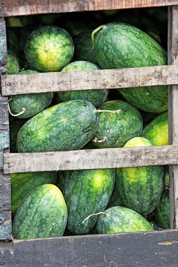 Stock Photo: 1566-922070 Riverboat hold packed with melons Cai Ran floating market near Can Tho Vietnam