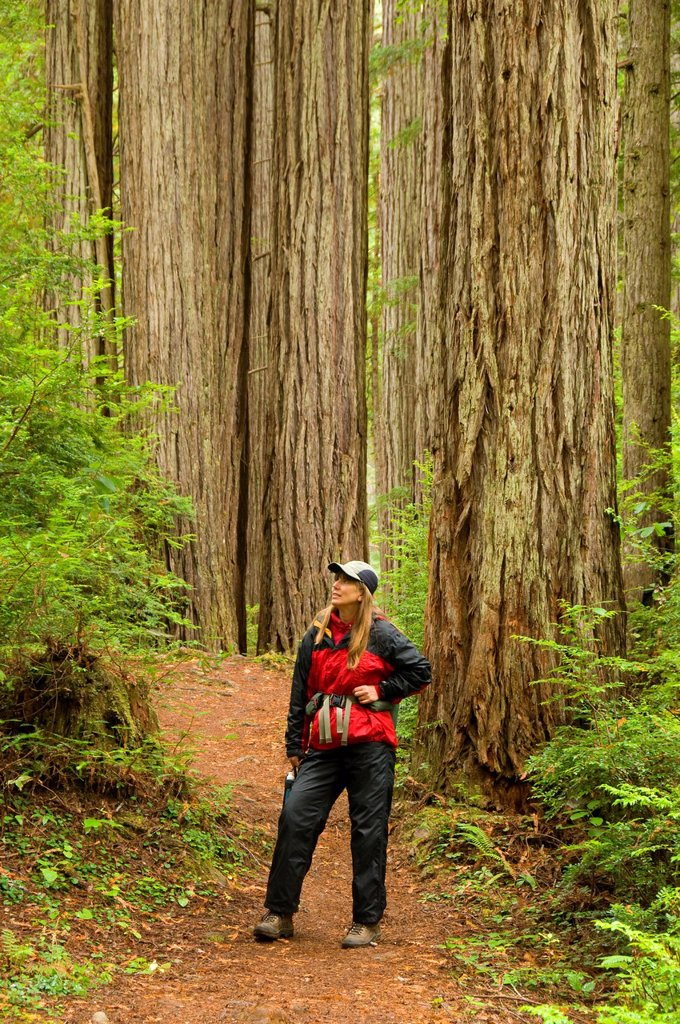 James Irvine Trail, Prairie Creek Redwoods State Park, Redwood National Park, California : Stock Photo