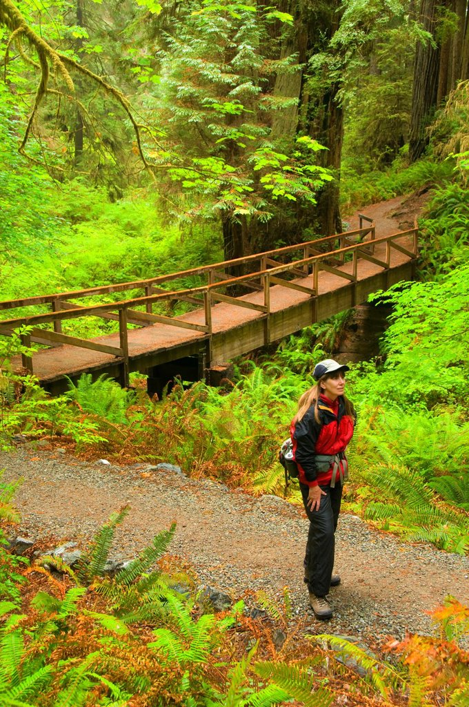Stock Photo: 1566-926171 Trail bridge on James Irvine Trail, Prairie Creek Redwoods State Park, Redwood National Park, California