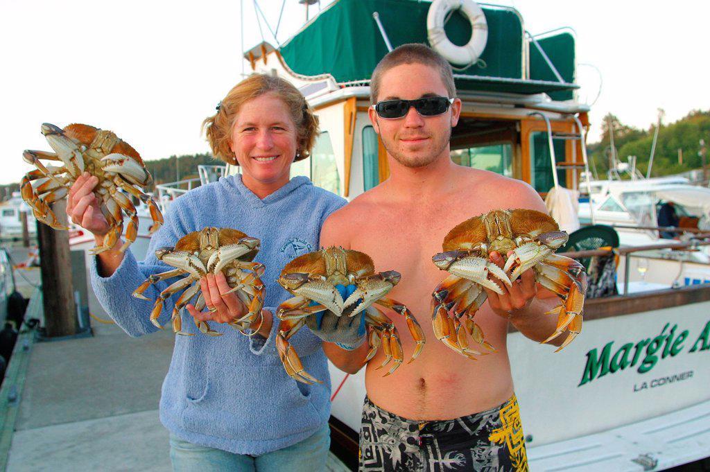 Dungeness Crabs, Friday Harbor, San Juan Islands, Washington State, USA : Stock Photo