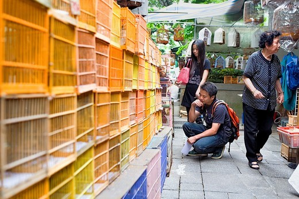 Stock Photo: 1566-933884 The Bird Market  In Yuen Po Street, Mong Kok, Kowloon,Hong Kong, China
