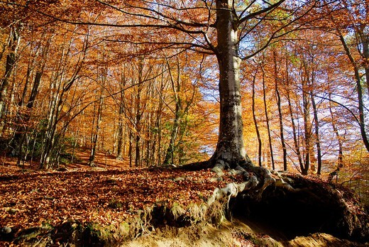 Stock Photo: 1566-935229 Forest