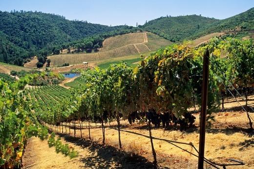 Stock Photo: 1566-936821 Stevenot Winery, near Murphys Ranch, Calaveras County, California