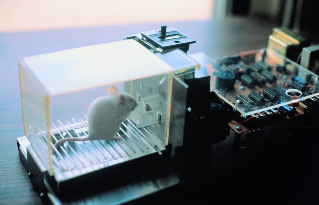 Lab rat in Skinner box : Stock Photo