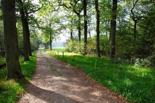Stock Photo: 1566-950299 Country road with oak trees on Estate Den Treek, Leusden, Netherlands