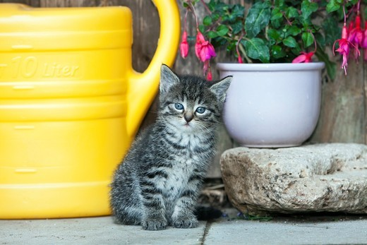 Kitten, sitting in front of garden shed, Lower Saxony, Germany : Stock Photo