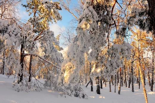 Crimea  Ukraine Wood  Ai-petri : Stock Photo