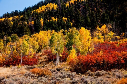 Fall colors along the Million Dollar Highway in Colorado : Stock Photo