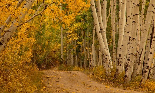 Autumn color along a rural road in the San Juan Mountains of Colorado : Stock Photo