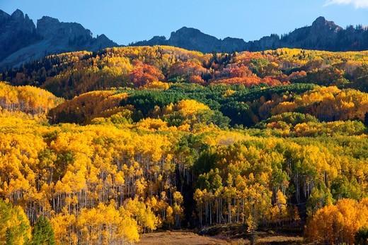 Stock Photo: 1566-953459 Fall, Kebler Pass, Colorado