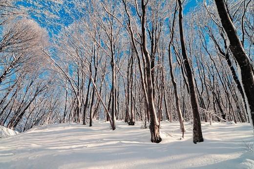 Crimea  Ukraine Wood : Stock Photo