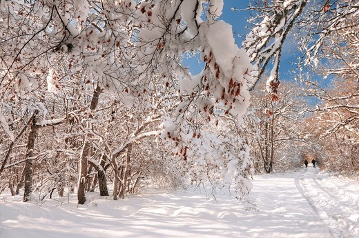 Peredovoe  Crimea  Ukraine Wood : Stock Photo