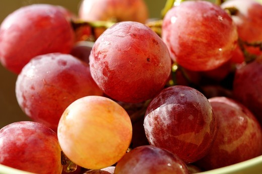 Stock Photo: 1566-954186 Horizontal image of a bunch of red grapes on a bowl photographed up close