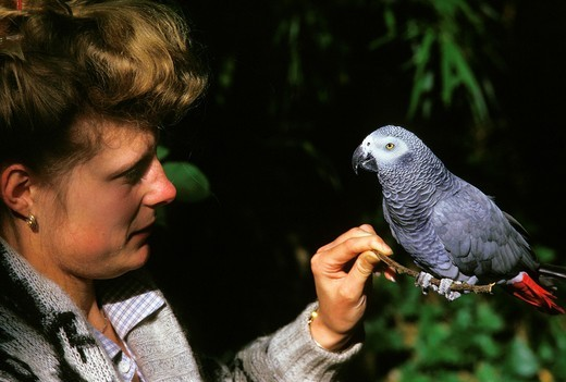Stock Photo: 1566-954343 Woman with African Grey Parrot, psittacus erithacus