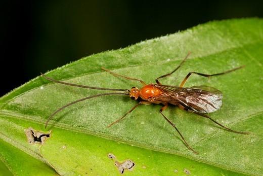 Stock Photo: 1566-955344 Bug from Kampung Skudup, Sarawak, Malaysia