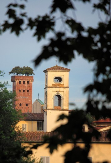 Stock Photo: 1566-955713 Italy, Tuscany, Lucca, skyline, Torre Guinigi,