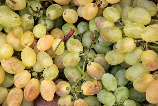Italy, Campania, Amalfi Coast, Ravello, grapes, : Stock Photo