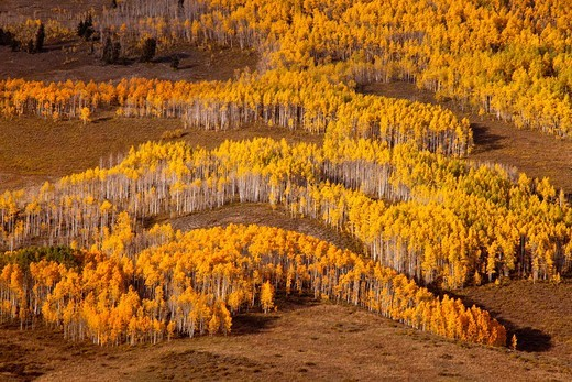 Fall color near Crested Butte, Colorado : Stock Photo