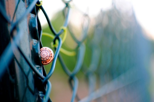 Snail finds rest in a fence : Stock Photo
