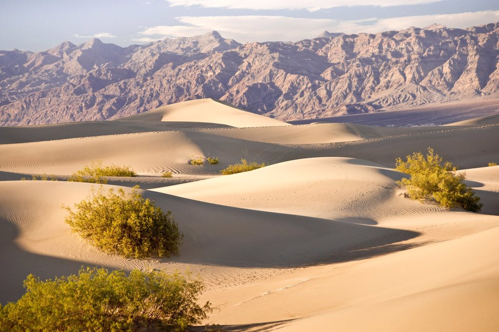 Stock Photo: 1566-959920 Serenity in sand as Death Valley dunes contrast with the barren mountains