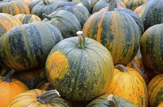 beautiful pumpkins after harvest : Stock Photo