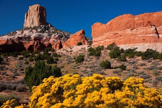 Wildflowers bloom in the summer in the red rock country of Arizona : Stock Photo