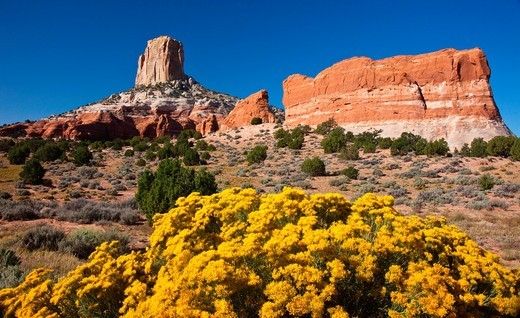 During the summer wildflowers bloom in the red rock country of Arizona : Stock Photo