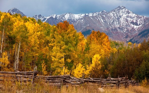Aspens peaking in the San Juan Mountains of Colorado : Stock Photo