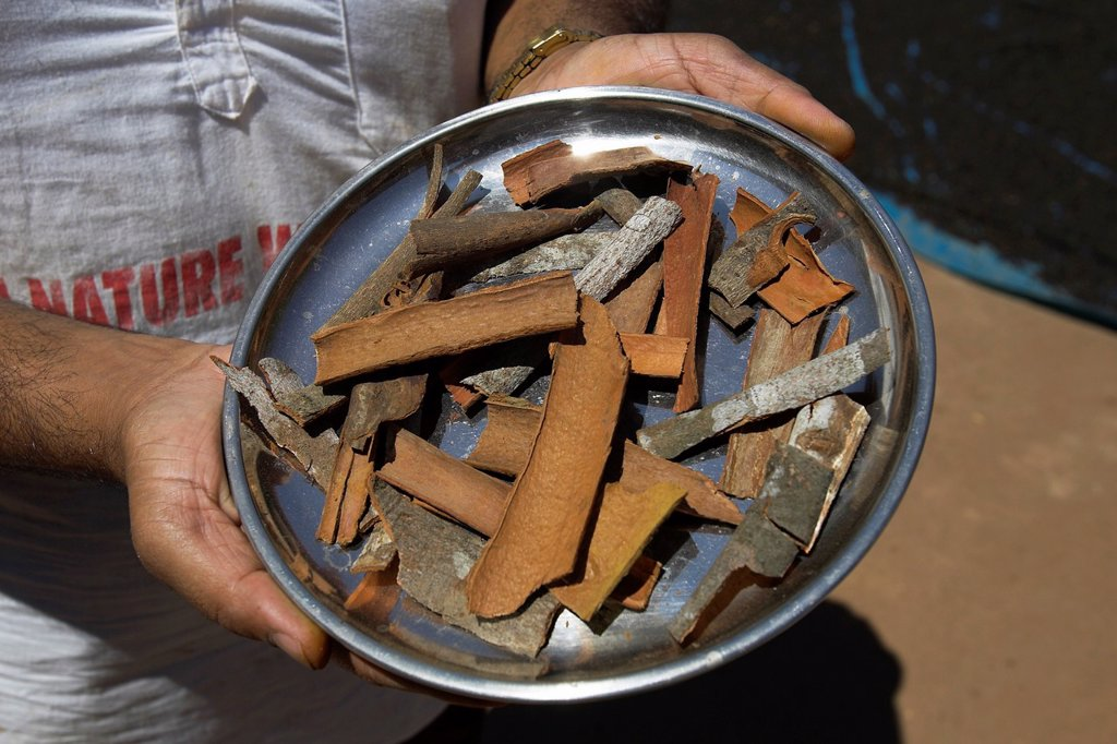 Bark of cinnamon laurel tree ground to make spice for confectionery and curries Sahakari Spice Farm Ponda Goa : Stock Photo