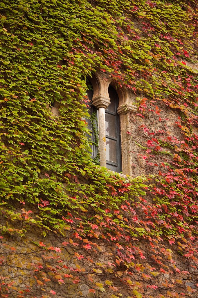 Stock Photo: 1566-968776 Spain, Extremadura Region, Caceres Province, Caceres, Ciudad Monumental, Old Town, ivy-covered wall