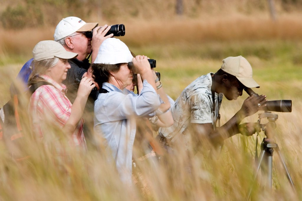 Stock Photo: 1566-969268 Guide looks for different species to show visiting bird watchers grassland mudflats near Tendaba Camp on Gambia River The Gambia