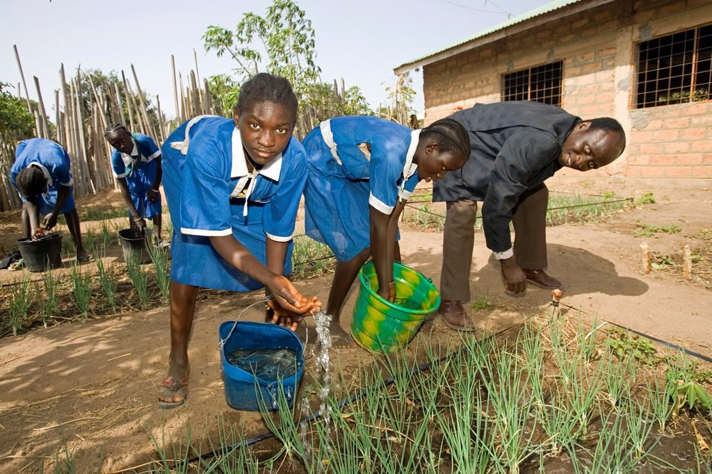 Headmaster helps students water onions in school garden primary school Berending village south of The Gambia : Stock Photo