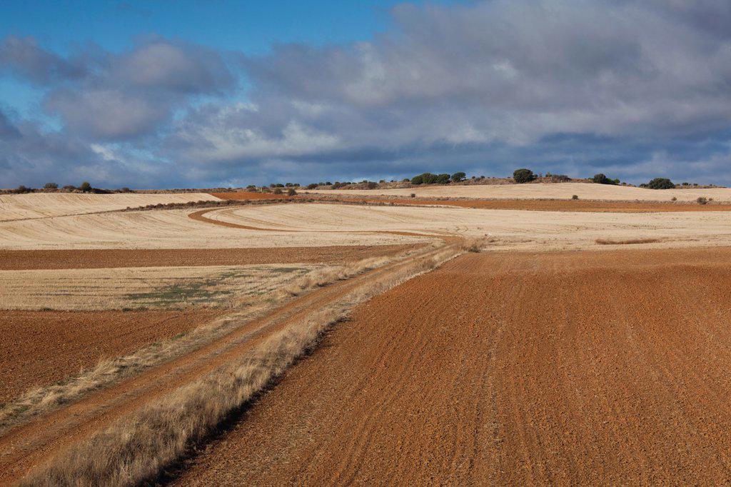 Stock Photo: 1566-971955 Spain, Castilla y Leon Region, Zamora Province, Benavente, farm field in autumn