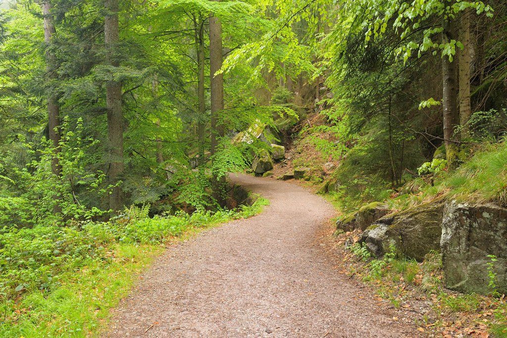 Stock Photo: 1566-973233 Path through Spring Forest, Triberg, Black Forest, Baden-Wurttemberg, Germany