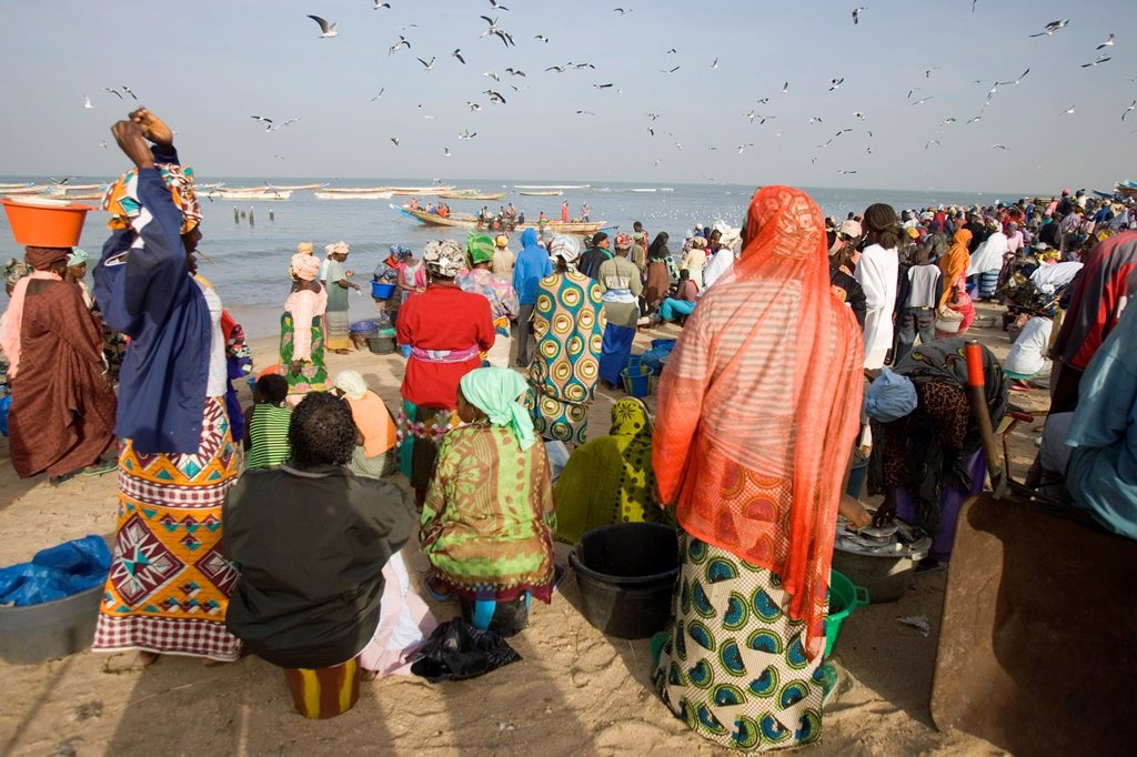 Stock Photo: 1566-974034 Crowd and seagulls wait as open fishing boats arrive with catch Tanji Beach The Gambia