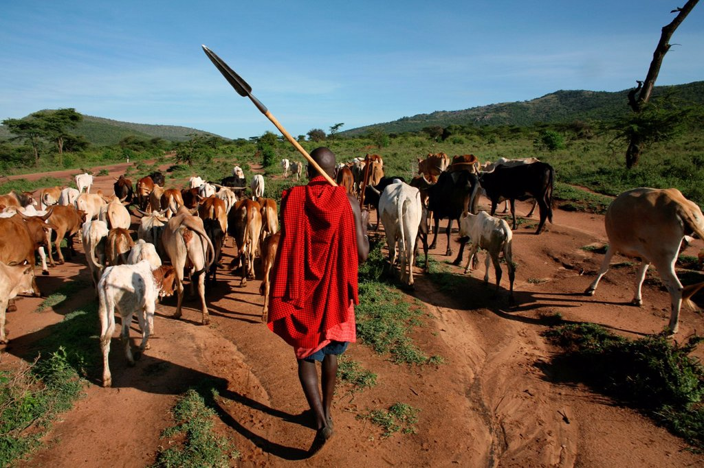 Stock Photo: 1566-977556 Ngoiroro is a village of 200 inhabitants, all belonging to the Massai Tribe The village lays right in the rift valley, south of Nairobi against the tanzanian border The Massai live very close to nature and their animals The cows and goats are more importa